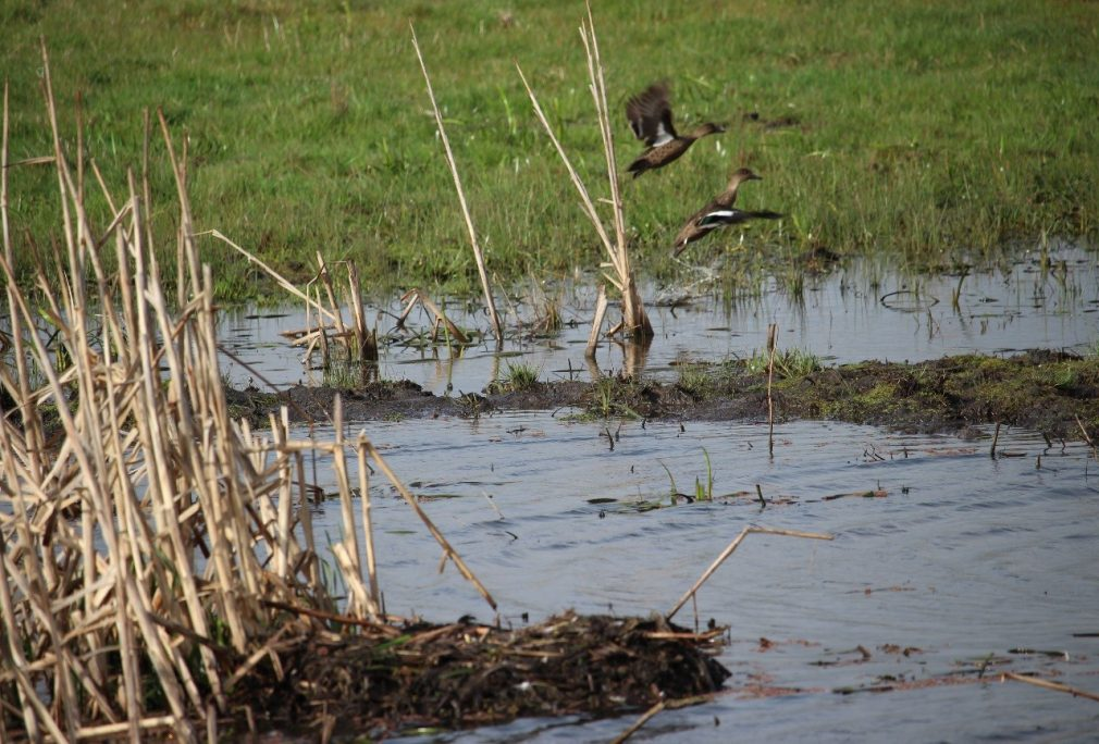 Devonport Airport Wildlife Hazard Management Plan