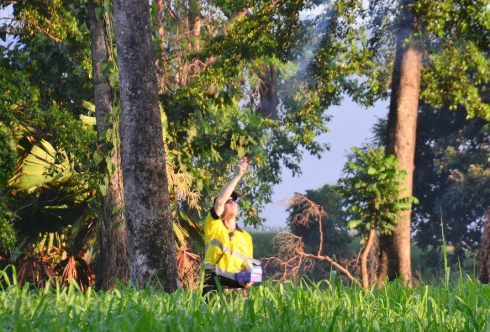 Ingham Flying-fox Roost Relocation Strategy