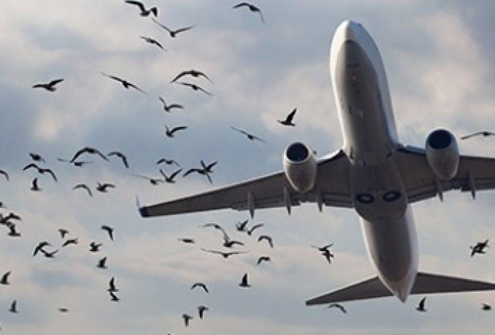 Department of Defence Wildlife Hazard Management Plan Reviews